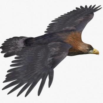 Crude Eagle