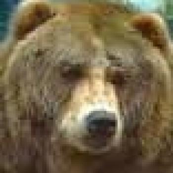 Anal Bear